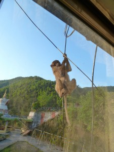 MonkeyWindowleave